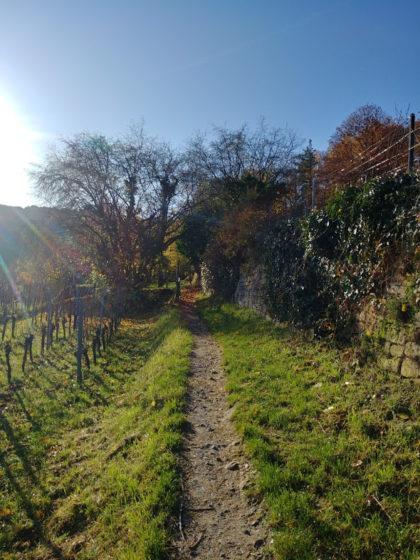 In den Weinhängen oberhalb von Wachenheim