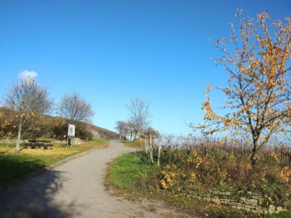 Vom Anstieg zur Wachtenburg abgesehen höchstens mal kleine Geländedellen