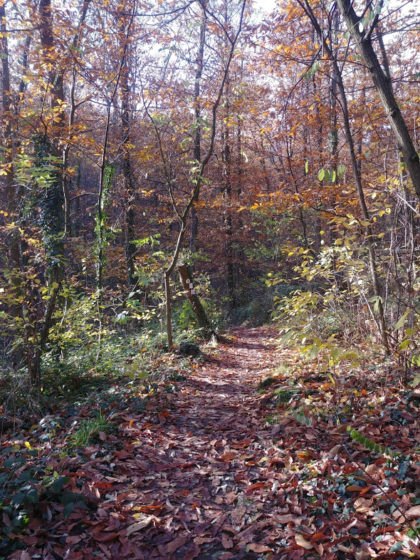 Dann auch mal eine kleine Waldpassage