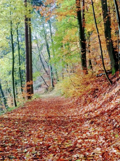 Die Farben kehren in den Wald zurück