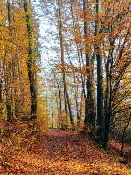 Ein Herbsttag wie aus dem Bilderbuch!
