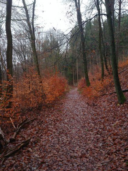 Ein letztes Mal wandere ich in den Wald hinein
