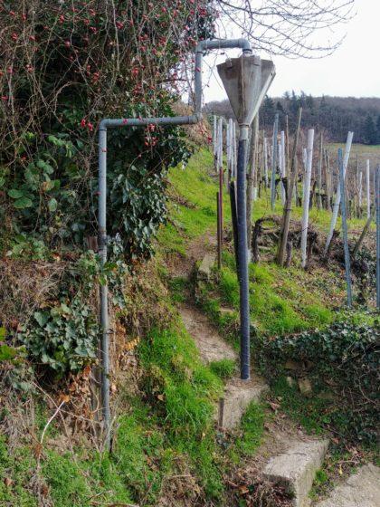 """Wir durchstreifen einen Teil des """"Natura-2000-Vogelschutzgebietes"""""""