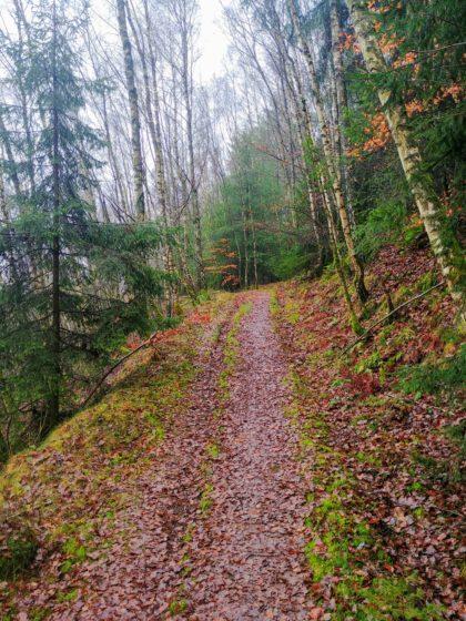 Die ersten Meter im Wald