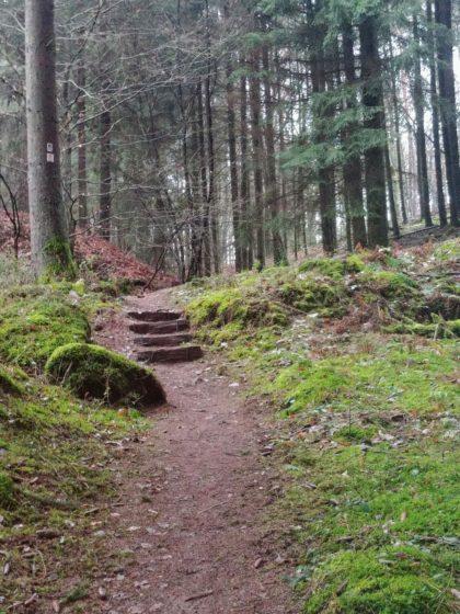 Für ein paar hundert Meter ändert der Wald sein Erscheinungsbild