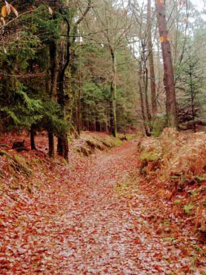 Dann wieder Herbstwald