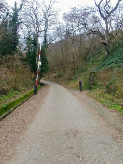 Irgendwo oberhalb von Dossenheim wandern wir in den Wald hinein