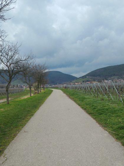 Einer dieser typischen grauen Asphaltwege an den flachen Weinhängen vorüber