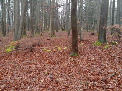 Blick in einen herbstlich anmutenden Wald