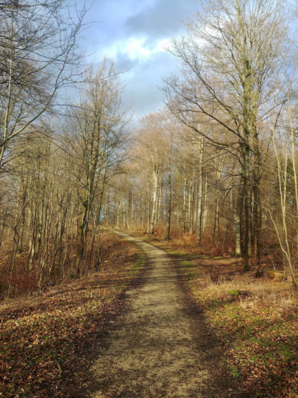 Es ist jetzt ein ruhiges Gehen durch einen lichterfüllten Wald