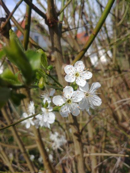 Der Frühling ist nicht mehr weit