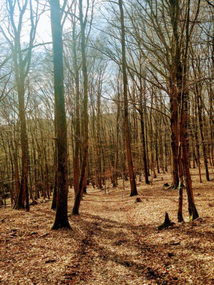 Wunderbarer Frühlingswald