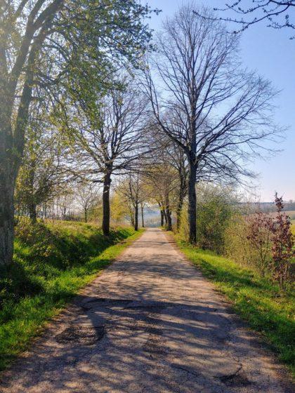 Zwischen Finkenrech und Dirmingen