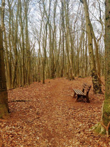 Schon bald aber befinde ich mich mitten im Wald, auf einem schmalen, kaum erkennbaren Pfad