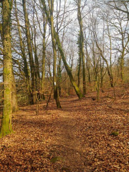 Die letzten zwei Kilometer auf dem Panoramapfad