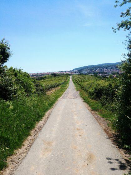 Die letzen paar hundert Meter bis Bad Dürkheim