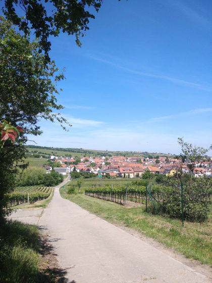 Blick auf Kallstadt