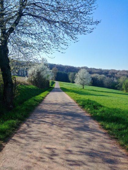 Wieder so ein Asphaltweg zwischen Wiesen