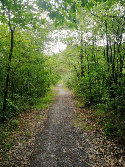 Auf dem Gelände der ehemaligen Grube Kohlwald; außerhalb des Bildes eine gerodete Halde