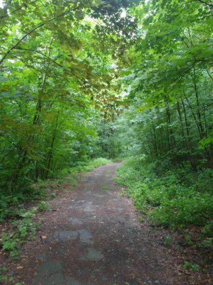 Immer wieder kleine Waldpassagen, aber ich befinde mich heute wirklich nicht in einer abgeschiedenen Gegend