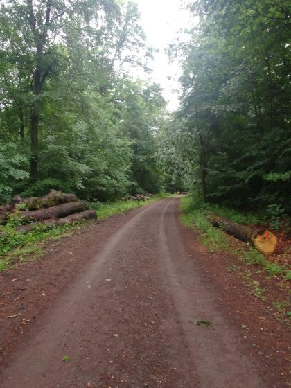 Die längste Waldpassage des Tages beginnt - ungefähr einen Kilometer ...