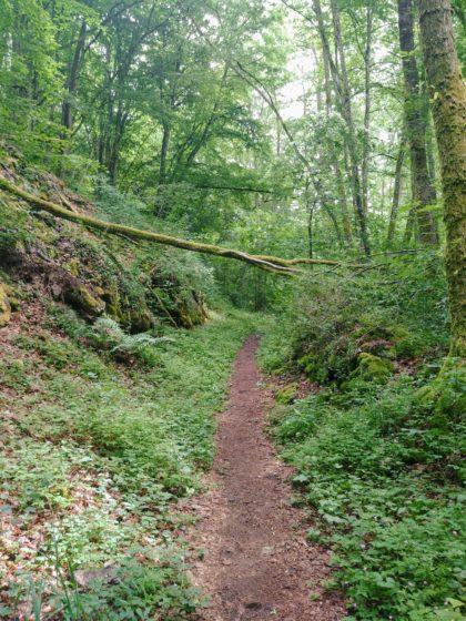 Die ersten beiden Kilometer wandere ich so gut wie ausschließlich bergauf