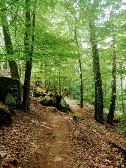Naturwald Fleischhackerloch
