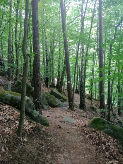 Überall auf dem Weg und im Wald kleinere und größere Felsbrocken