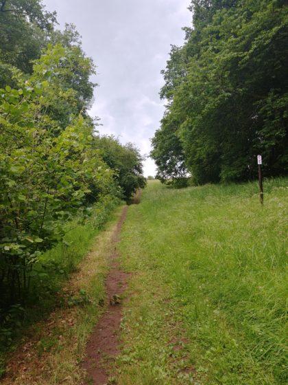 ... und wandere über einen schönen Wiesenpfad