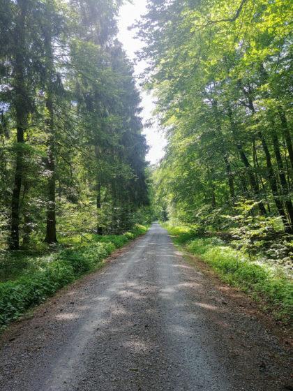 Der Wald ist schön, aber der Schotter beginnt zu nerven