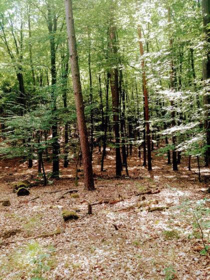 In der Tiefe des Waldes