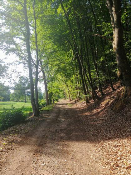 Von den 15 Kilometern des Waldpfades bekomme ich nur etwa drei zu sehen