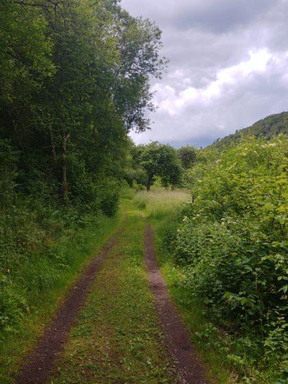 Auf den nächsten Kilometern bewege ich mich meistens in unmittelbarer Nähe des Naheufers