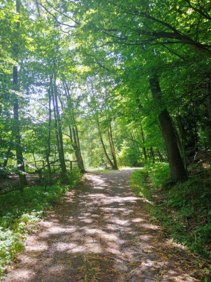 Und schon wieder im Wald