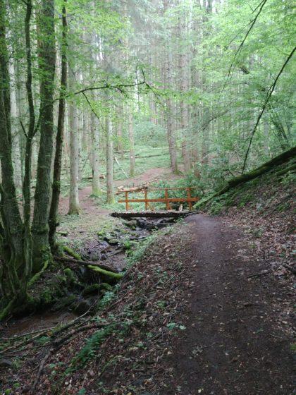 Immer noch Waldidylle
