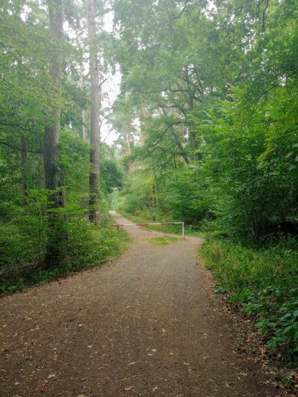 Im Wald vor Steinheim