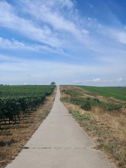 Rheinhessen ist Weinbaugebiet, das ist nicht zu übersehen