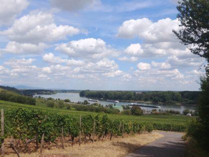 Von nun an begleitet uns der Rhein