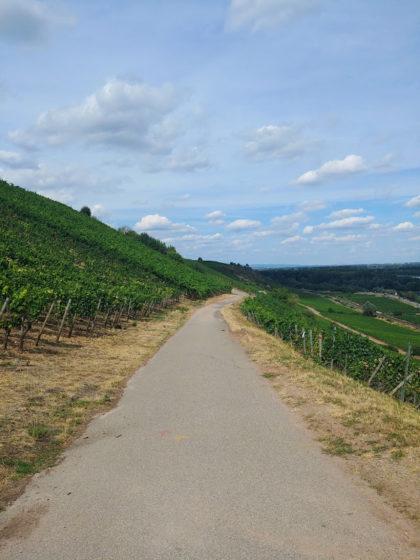 Klar die schönste Etappe des Rheinterrassenweges