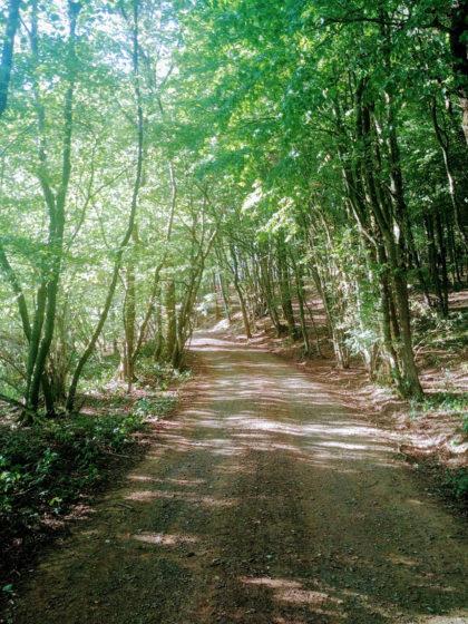Ein bisschen Wald gibt es zwischendurch schon noch
