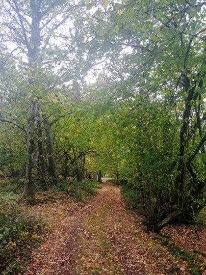 Nach dem Scheuerberg steht noch das Naturschutzgebiet Breitenstein auf dem Programm