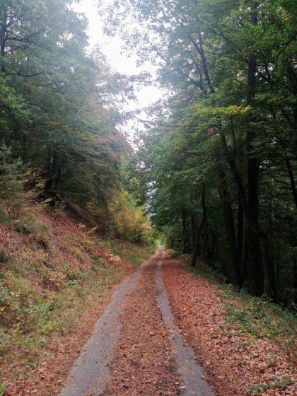 Hier spürt und sieht man den Herbst jetzt ganz deutlich