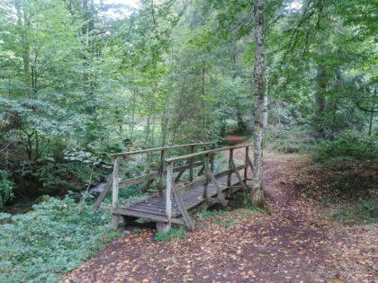 Holzbrücken treten oft in Rudeln auf, auch auf diesem Wanderweg