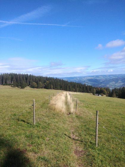Kurz vor der Rappenecker Hütte - ein Wiesenpfad voller Löcher und Furchen