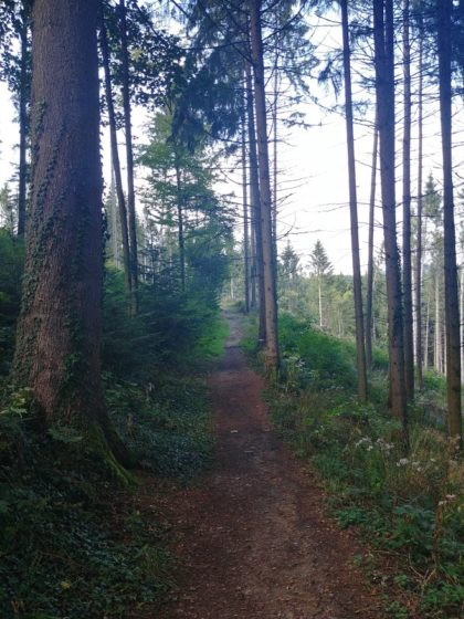Die letzen Kilometer bis Kappel führen wieder durch Wald