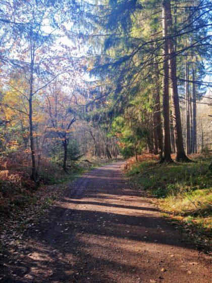 Wieder Wald