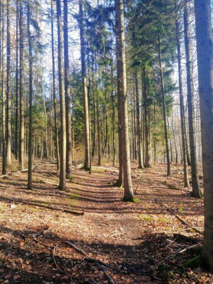 Offener Novemberwald