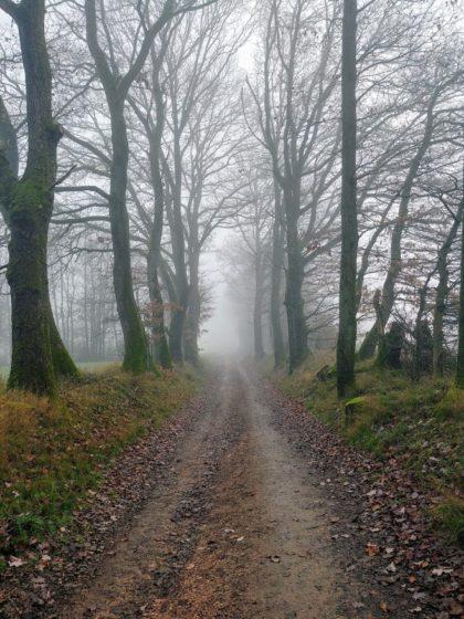 Ob der Nebel sich heute irgendwann doch noch mal verzieht?