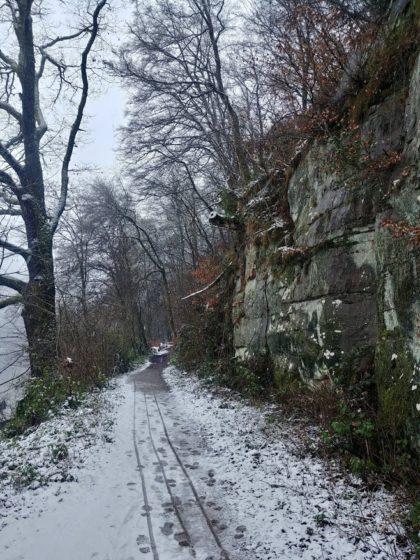 Auf einer Böschung oberhalb des Neckars