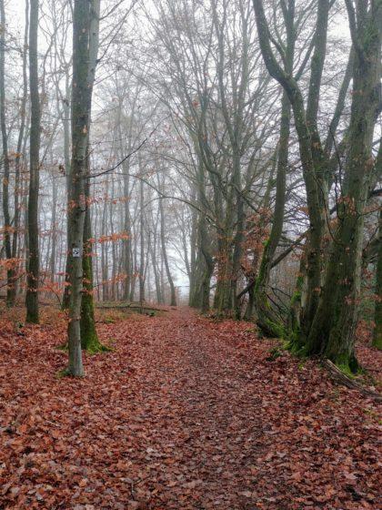 Ich biege spontan auf einen mir unbekannten Wanderweg ab